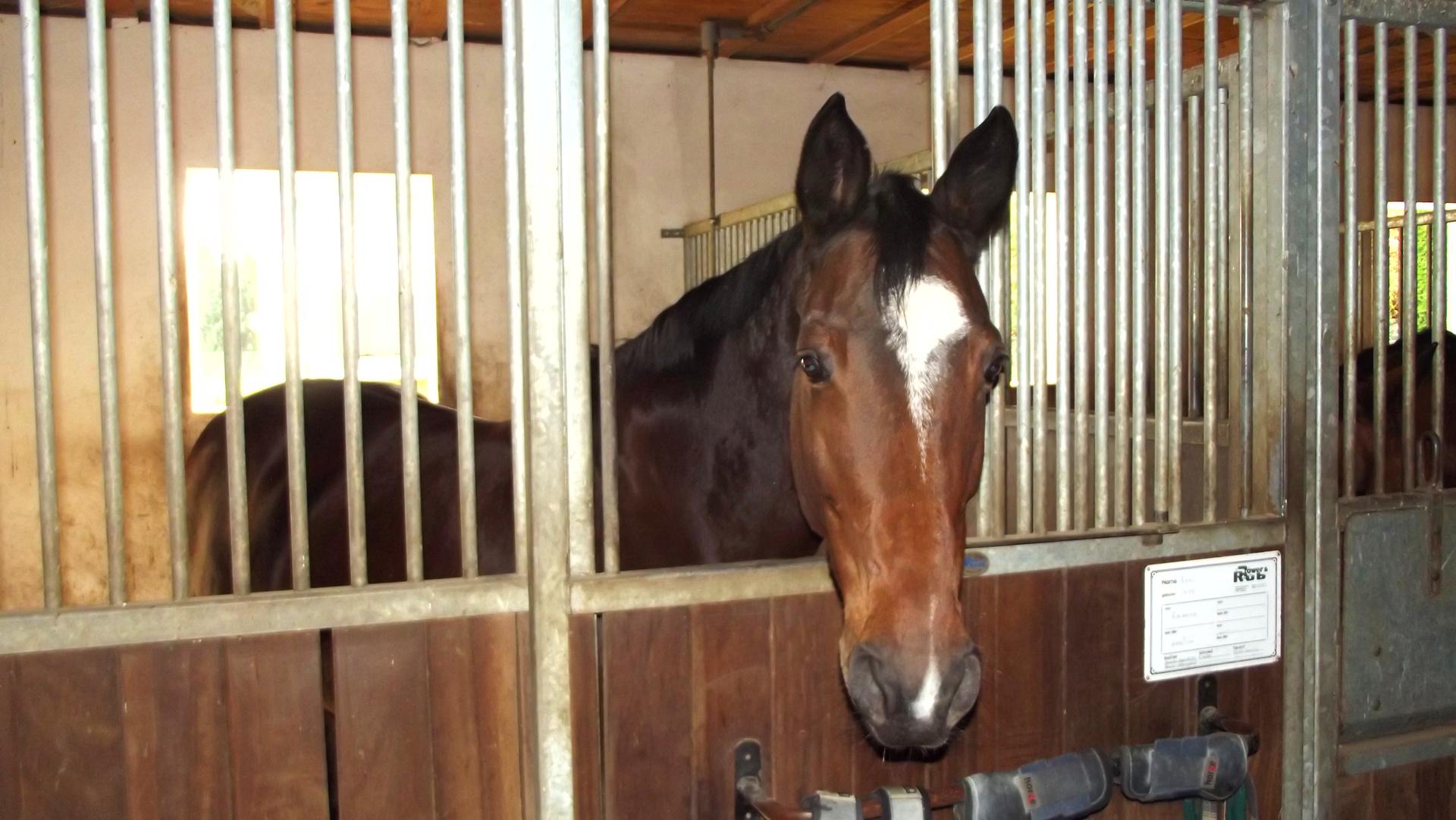 pferde gut bieber